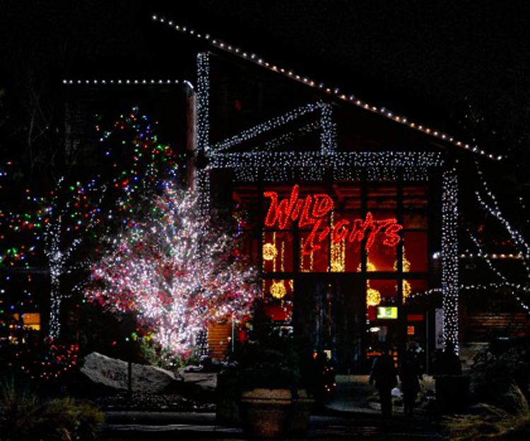Holiday events in Canton and Akron Ohio Wild Lights Akron Zoo